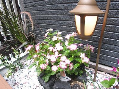 坪庭の花壇