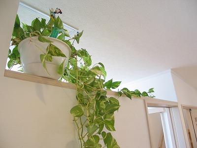 洗面入口上部をあけてグリーンを飾る