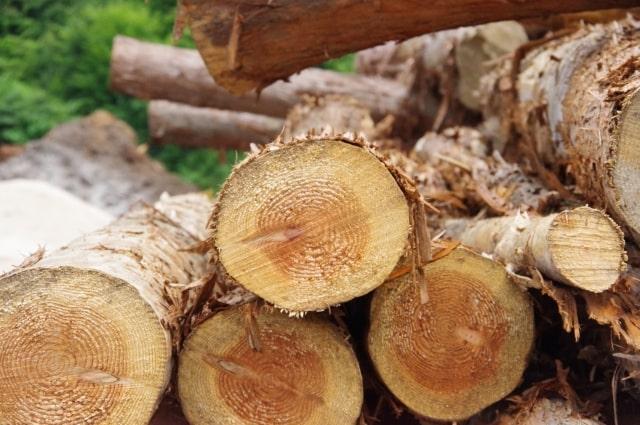 世界的に木材不足ウッドショック